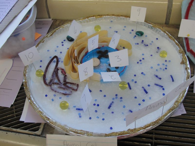 7Th Grade Science Cell Project http://www.tripointschools.org/vnews/display.v/ART/2010/10/06/4caca9efe84ae