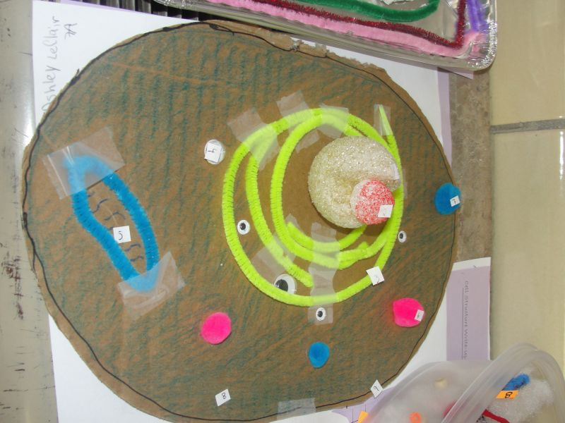7Th Grade Science Cell Project http://www.tripointschools.org/vnews/display.v/ART/4caca9efe84ae